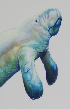 manatee watercolor - Google Search