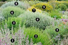 Plantas que requieren poca agua y soportan bajas temperaturas Dry Garden, Terrace Garden, Plant Design, Garden Design, Provence Garden, Sloped Garden, Low Maintenance Garden, Mediterranean Garden, Gardens