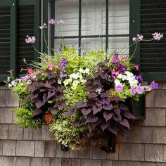 Plant a Better Window-Box Garden