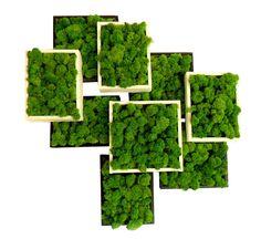 tableau_vegetal_avec_mousse_verte