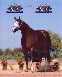 Sheza Mighty Cool Kid as a yearling