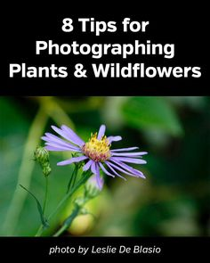 8 Tips for Photographing Plants and Wildflowers. Photography, flowers,plants, nature, landscape, #naturephotography, #flowerphotography