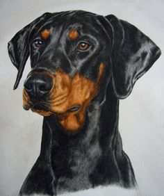 Dobermann - One of the best dogs there is! watercolor dog portrait, painting by artist Anne Zoutsos