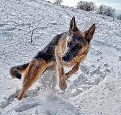 The Snow-Dance  #cute #pets #cutepets #pet #babblepets