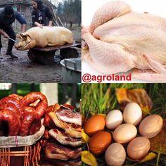 Gospodarii care doresc să iși vândă produsele (porci de tăiat carne de curcan de gâscă rață bibilică sau pui mezeluri făcute in casă sau ouă de țară) sunt invitați să iși promoveze produsele pe pagina Agroland! Trimite-ne mesaj si noi te vom promova! Singura condiție este să fii un fermier onest!  #agroland #hranacurata