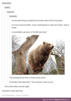 """I dare someone to make an FS account  called """"bearbearbear"""""""