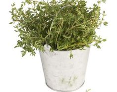 A Planting Guide for Red Creeping Thyme | eHow.com