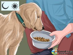 •Feed your dog on a regular schedule.  It is recommended that you feed your dog twice a day.Figure out the proper amount you should be feeding your dog daily, which is usually on the dog food package, and divide that amount in two. Feed your dog the first half in the morning and the second half in the evening. A stable routine of feeding can also help you with house training. Dogs usually have to go to the bathroom 20 - 30 minutes after eating.