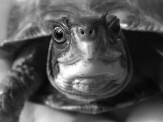 Emoticon Faces Acted Out by Turtles