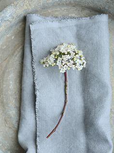 Elderflower season
