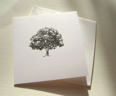 oak tree illustration - Pesquisa Google