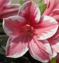 tutorials for dozens of gumpaste flowers