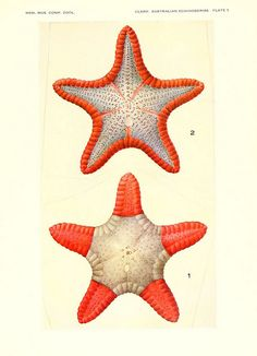 Echinoderms from Australia Cambridge, U.S.A. Printed for the Museum, 1938