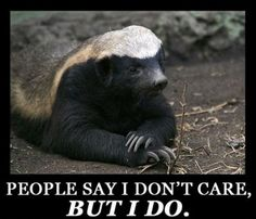 On the other hand...apparently Honey Badgers do care. @Marissa Herrera @Becky Outlaw @Kristin King