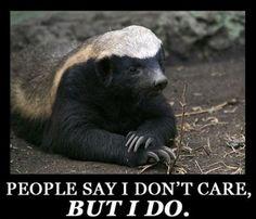Awww Honey badger. . .