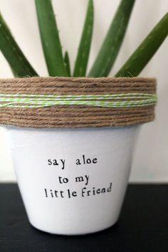 Succulents Diy 109