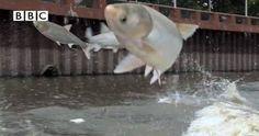 4 Fish Fish, Pets, Animals, Animales, Animaux, Animal, Animais, Animals And Pets