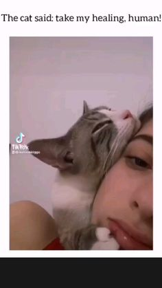 Funny Cute Cats, Cute Baby Cats, Cute Funny Animals, Kittens Cutest, Cat Room, Cute Animal Pictures, Siamese Cats, Cat Breeds, Cat Memes