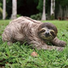 The Most Beautiful Sloths Are Here to Remind You to Relax