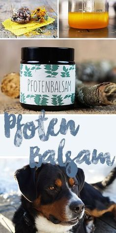Pfotenbalsam selber machen – so sind die Pfoten unserer Hunde perfekt im Winter … Make paw balm itself – so the paws of our dogs are perfectly protected in winter! Coconut Oil Dogs Skin, Oils For Dogs, Dog Paws, Happy Dogs, Dog Life, I Love Dogs, Funny Dogs, Animals And Pets, Dog Food Recipes
