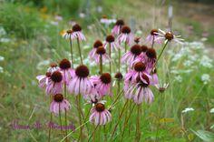Flowers of Glen Rose