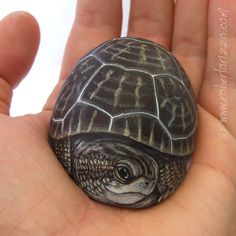 I Painted this Rock Tortoise on a Wonderful Shaped Natural Sea Stone. A unique Piece of Art for Turtle Collectors and a great Gift Idea!
