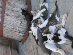 The old cat mother Namibia with all the kittens of the farm, are you able to count them?