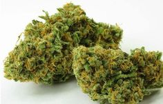 Another great hybrid mix with Girl Scout Cookies….this time it's bred with Green Crack and its amazing!!! Green Crack - Don't let the name fool you: this is pure cannabis. Few strains compare to Green…