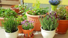 What is the best potting soil for herbs? We cover the top 5 soil and give you some tips on how to grow herbs in pots or containers! Herb Garden Design, Diy Herb Garden, Garden Pests, Garden Ideas, Container Flowers, Container Plants, Container Gardening, Vegetable Gardening, Organic Gardening