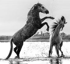 Credit: David Yarrow Photography Most of the pictures in the book were taken before breakfast or at sunset – with good light comes a greater...