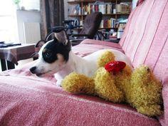 Roman the pup
