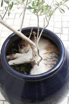 18 доказательств того, что коты — это растения!