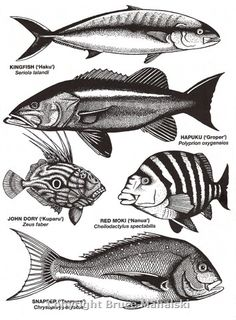 NZ tonal fish drawings Drawn Fish, Fish Artwork, Fish Drawings, Marine Fish, Metal Art, Art Boards, Printmaking, New Zealand, Whale