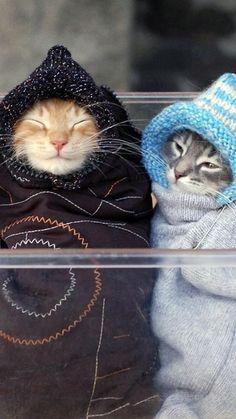 Katter i stickat.