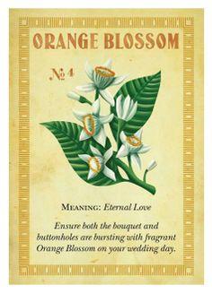 orange blossom print
