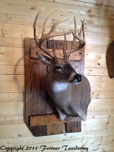 Fortner Taxidermy The Effective Pictures We Offer You About Deer Hunting Decor, Deer Head Decor, Deer Hunting Blinds, Hunting Stuff, Bow Hunting, Taxidermy Decor, Taxidermy Display, Deer Mount Decor, Deer Shoulder Mount