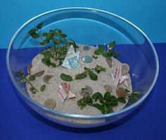 akvárium pénzhalakkal