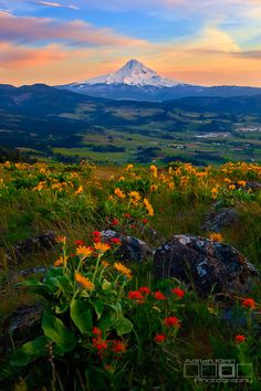 Spring blooms basking in the remaining minutes of sunset light in the Columbia River Gorge ~ by Adrian Klein