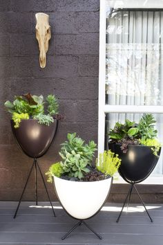 . I discovered the Hip Haven retro bullet fiberglass planter with steel stand before it became hugely popular with designers and architects alike. Lucky for me, I found these on hayneedle.com and used a mix of white, black, and chocolate versions to add some 1950s styling to the exterior of my house.