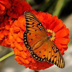 . #putdownyourphone #awesome #butterfly #beautiful nature #colour #amazing
