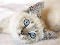 Curiosidades, biología, historia, razas... ¿lo sabes todo sobre estos pequeños felinos? Compruébalo con nuestro test.