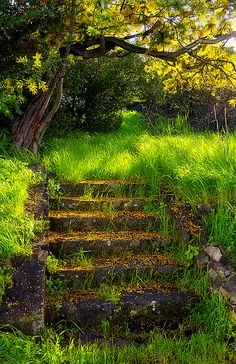 Enchanted Stairs by Abe Kleinfeld.... I wonder what the house that those use to lead to looked like...