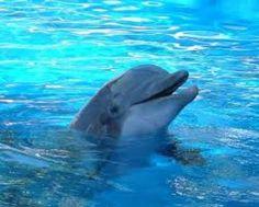 Los delfines duermen con un ojo abierto.