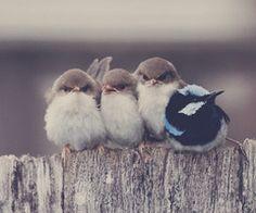 *Birds