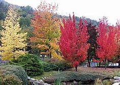 Foliage in Valle d'Aosta: scopri i luoghi da non perdere