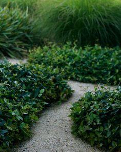 Trachelospermum asiaticum to base of concrete retaining walls and ground cover areas Modern Landscaping, Landscaping Plants, Outdoor Landscaping, Outdoor Plants, Outdoor Gardens, Edging Plants, Seaside Garden, Landscape Materials, Home Garden Design