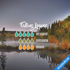 Falling Leaves - Essential Oil Diffuser Blend