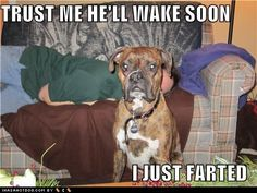 HaHaHa! Having a Boxer...I have totally had this happen to me! They're a flatulent breed! Lmbo!!! #lilo