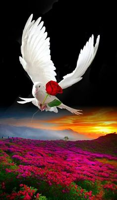 Biblical Art Flowers Nature Beautiful Pictures Beautiful Dream Beautiful Birds Animals Beautiful Beautiful Places Peace And Love Morning Love Quotes Dove Images, Dove Pictures, Love Heart Images, Pictures Of Christ, Nature Pictures, Beautiful Love Pictures, Beautiful Dream, Beautiful Birds, Animals Beautiful
