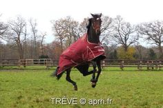 Treve in winter layoff